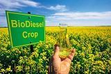 Для производства биодизеля нужны растения